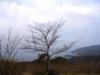 Echizen_town1